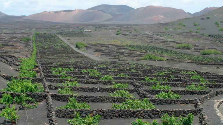 Lanzarote Wines of Economic Importance