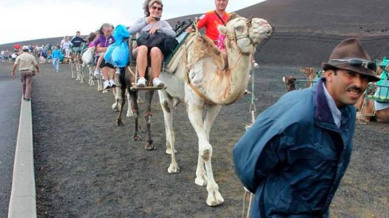 Camels Return to Work