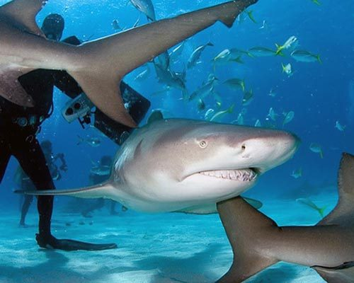 Five Meter Shark Spotted In The North of Lanzarote