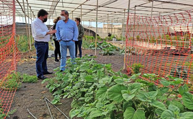 Plan to Farm Strawberries in Lanzarote