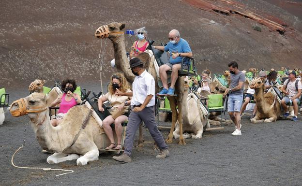 New camel Hut Plans For 2022
